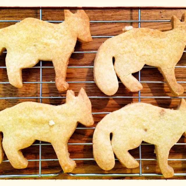 """Dog shaped biscuits"" stock image"