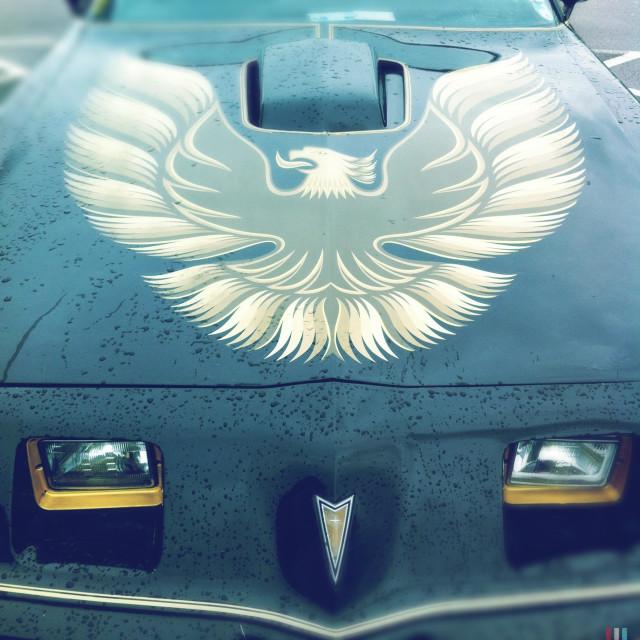 """""""Bonnet detail showing an image of a Phoenix on a Pontiac Firebird Trans Am car."""" stock image"""