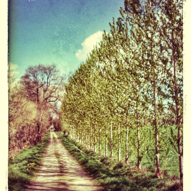 """""""Country lane in spring, France, Europe"""" stock image"""