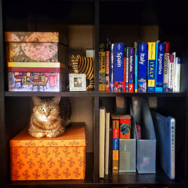 """Cat in a bookshelf"" stock image"