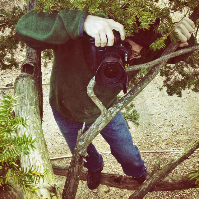 """""""Man in tree with camera taking pictures."""" stock image"""