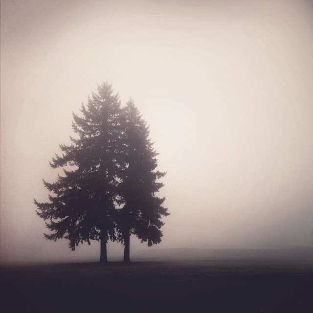 """two trees in fog"" stock image"