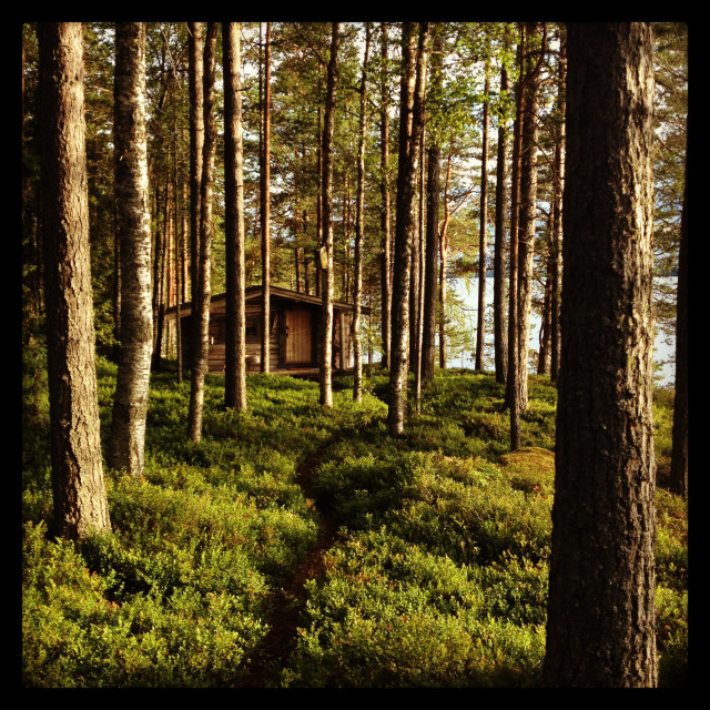 """""""A wooden hut deep in a wilderness forest..."""" stock image"""