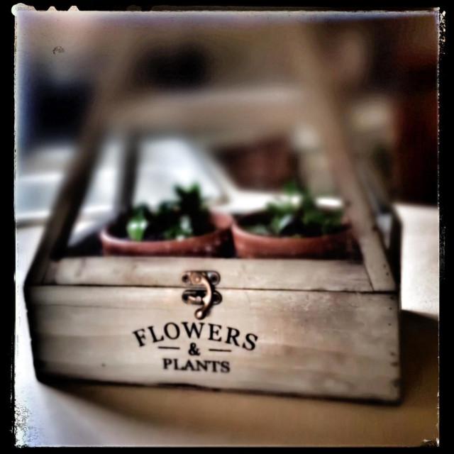 """Flowers&Plants"" stock image"