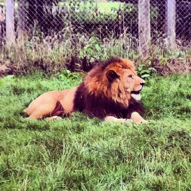 """Taken whilst on a safari park adventure up in sterling scotland. Blair Drummond Safari park"" stock image"