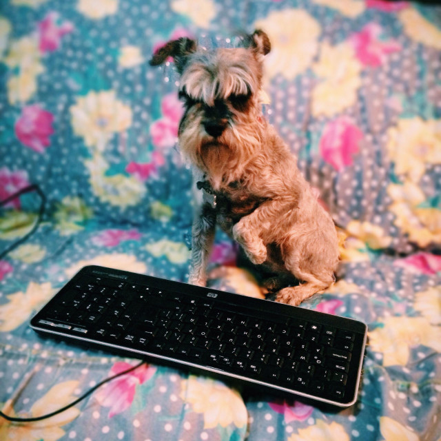 """Send e-Mail, schnauzer mini"" stock image"