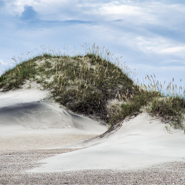 """""""Dune mound and sea oats, Outer Banks, North Caolina, USA"""" stock image"""