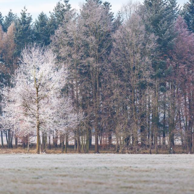 """""""Colourful trees in Třeboň, Czech Republic"""" stock image"""