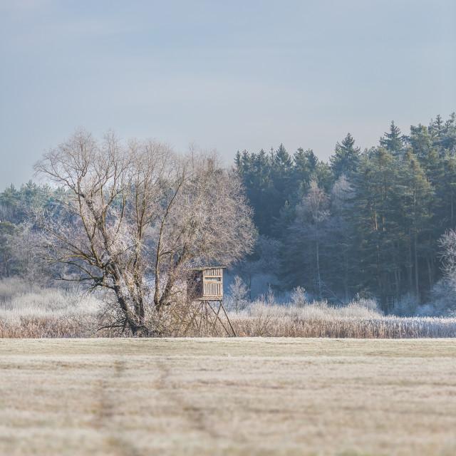 """""""A bird hide in a wintery field in Třeboň, Czech Republic"""" stock image"""