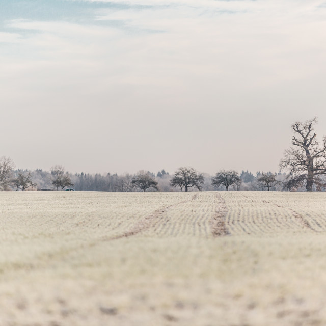 """Wintery field in Třeboň, Czech Republic"" stock image"