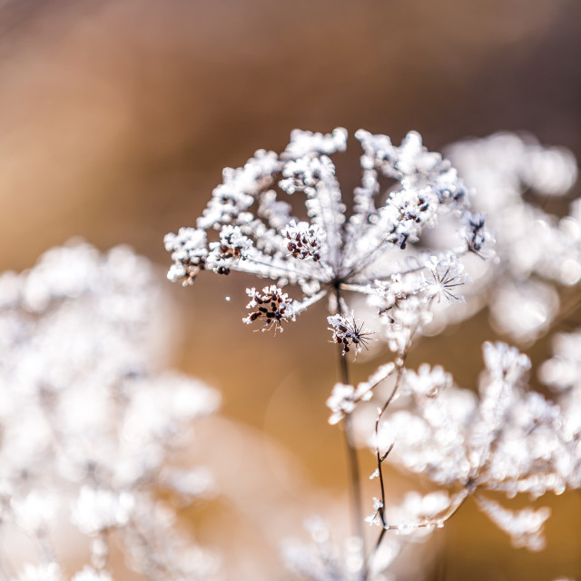 """Icy foliage in Třeboň, Czech Republic"" stock image"