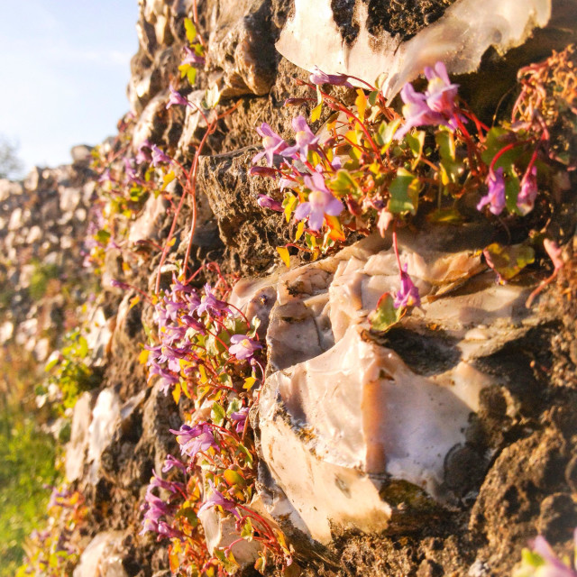 """""""Flowers in a wall"""" stock image"""