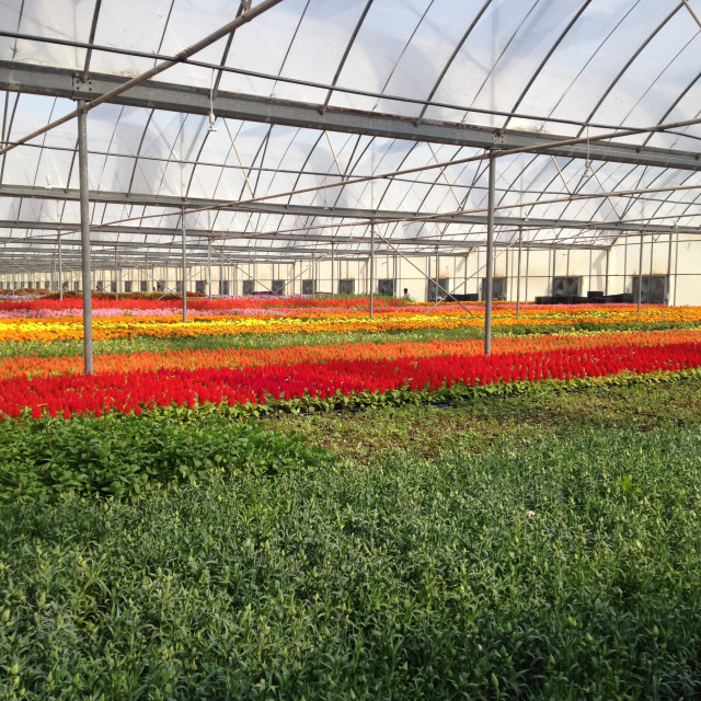 """Flower nursery"" stock image"