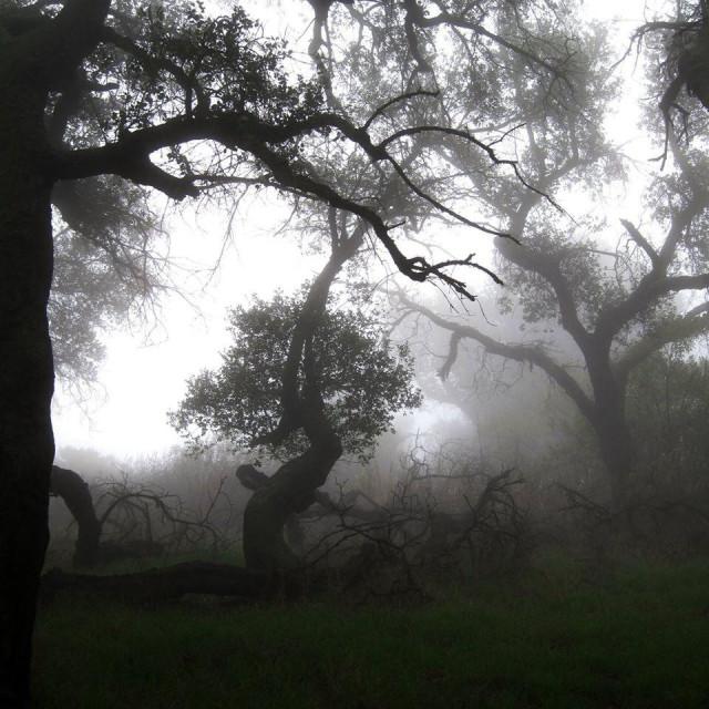 """""""Gloom trees"""" stock image"""
