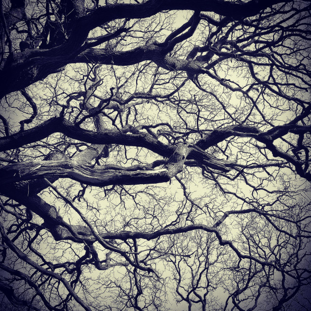 """""""Tree branches"""" stock image"""
