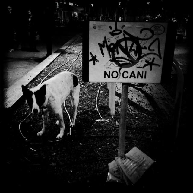"""No dogs allowed park funny scene discrimination"" stock image"
