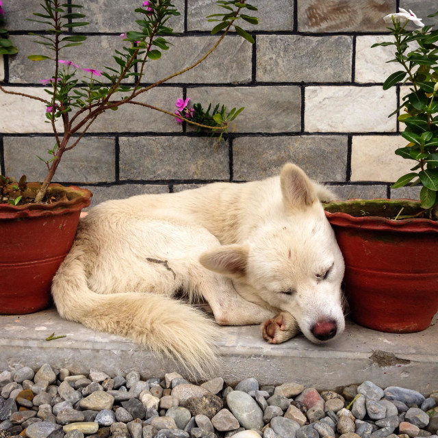 """Perhaps a flowerpot for a pillow makes for sweet dreams"" stock image"