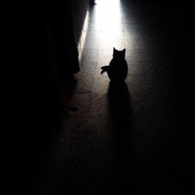 """""""Black female cat in Prado del Rey, Cadiz province, Andalusia, Spain"""" stock image"""