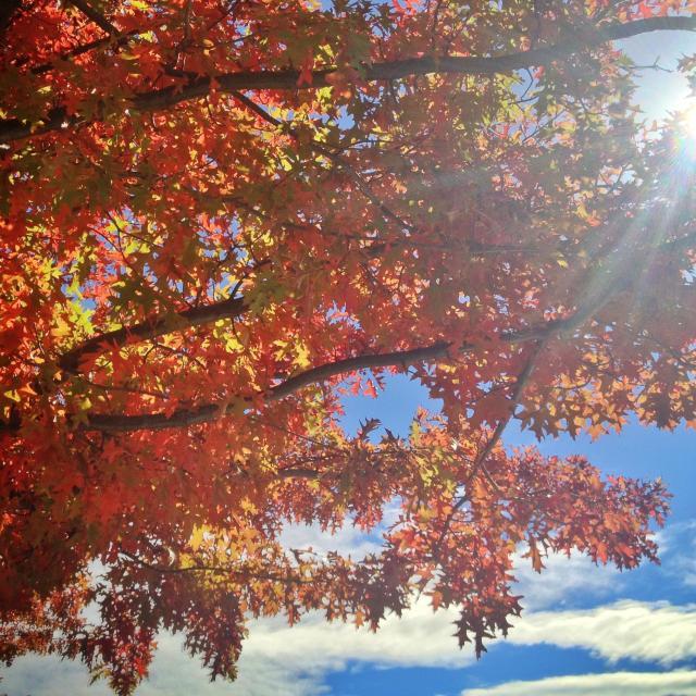 """""""Autumn, New Zealand"""" stock image"""