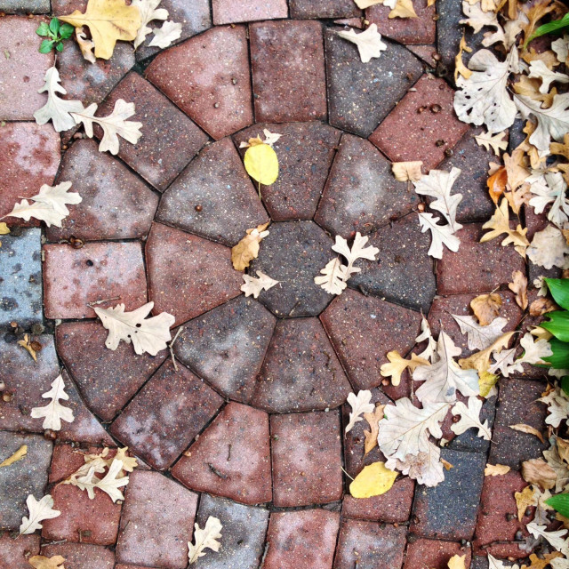 """Paver sidewalk with rose pattern in the fall"" stock image"
