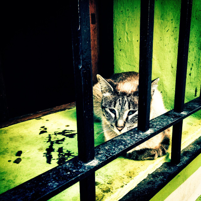 """""""Cat behind security bars sitting on window sill"""" stock image"""