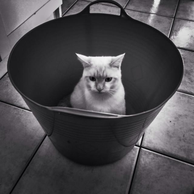 """""""Kitten in a basket"""" stock image"""