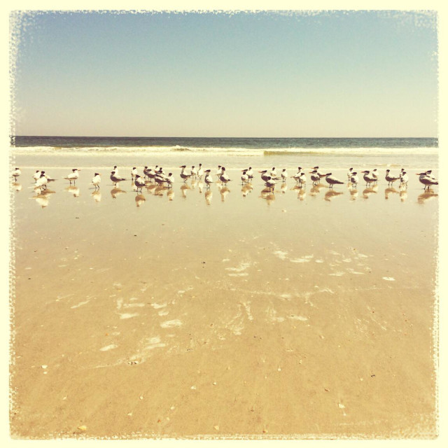 """Seabirds at Jacksonville Beach, Florida"" stock image"
