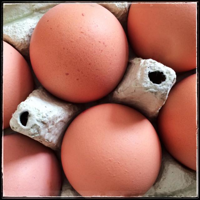"""Free range hens eggs in a cardboard egg box"" stock image"