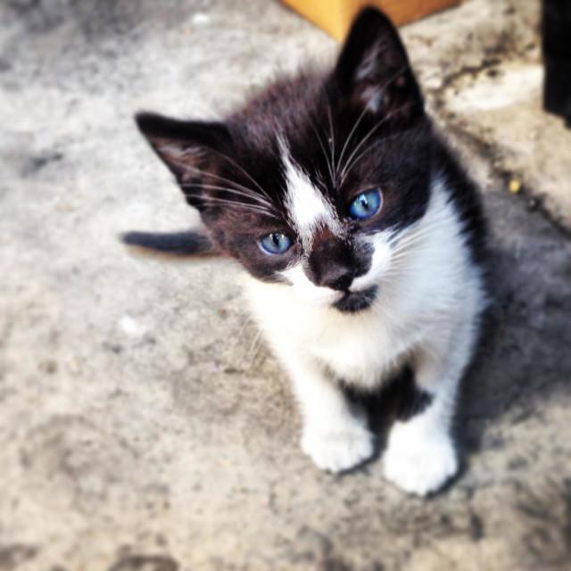"""Portrait of a kitten in Prado del Rey, Cadiz province, Andalusia, Spain"" stock image"
