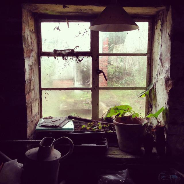 """Abandoned gardeners potting shed interior"" stock image"