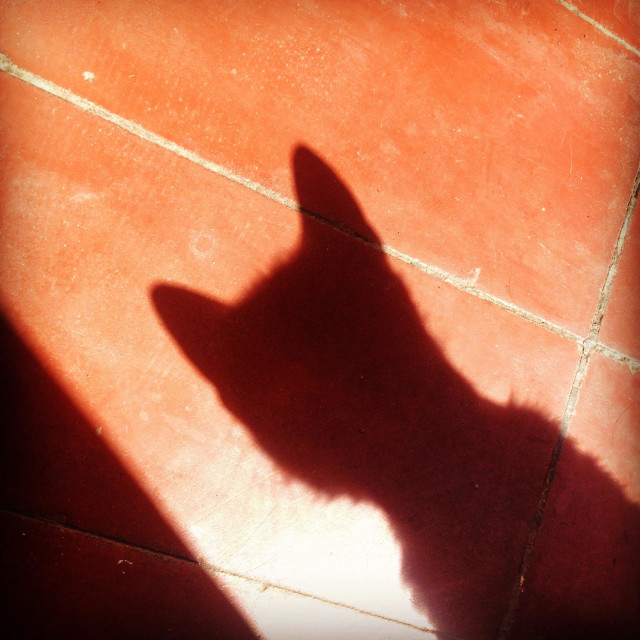 """""""The shadow cast of a cat in Prado del Rey, Cadiz province, Andalusia, Spain"""" stock image"""
