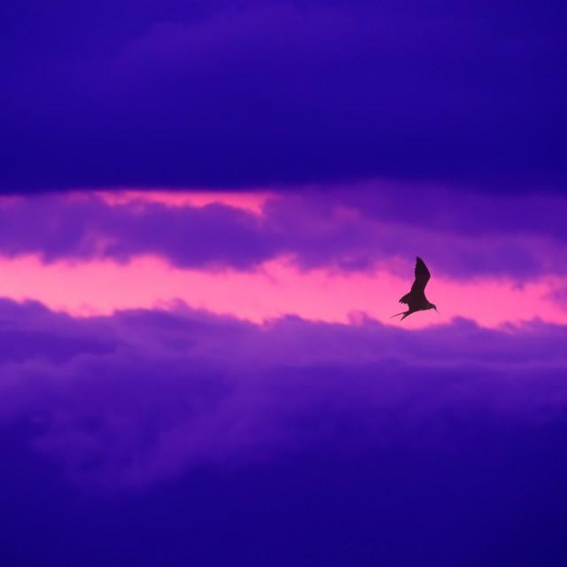 """""""Nubes con aves y sol"""" stock image"""