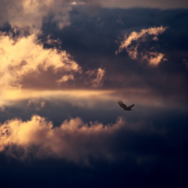 """Nubes con aves"" stock image"
