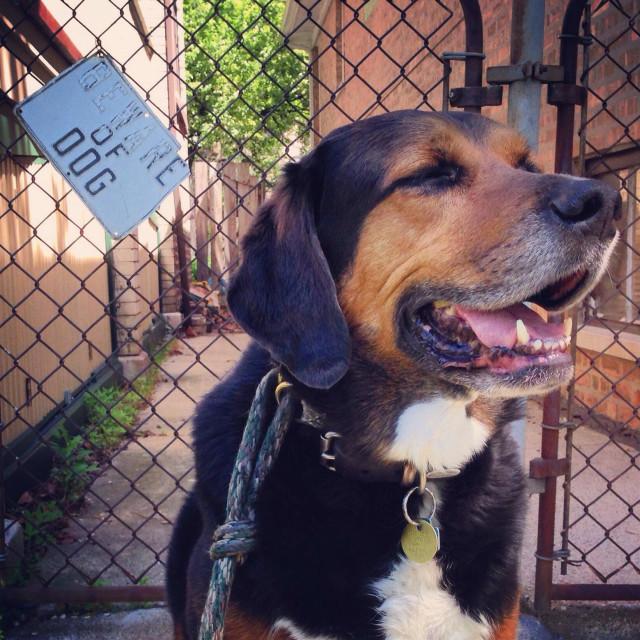 """Beware of dog"" stock image"