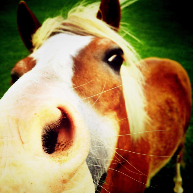 """""""Close up of horse nostril"""" stock image"""