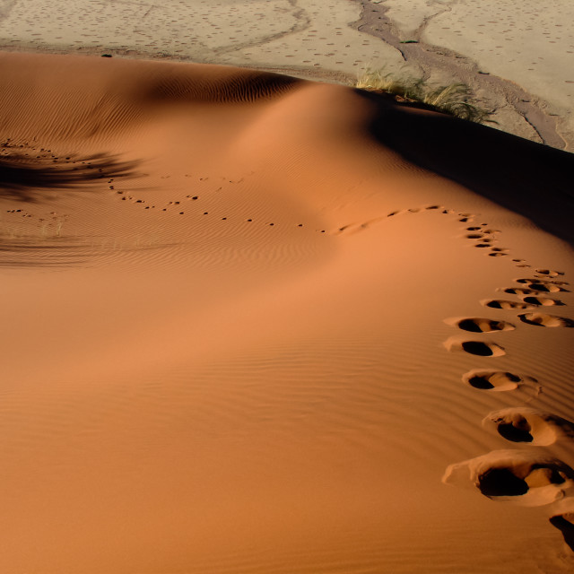 """Footsteps on a dune in Namibia"" stock image"