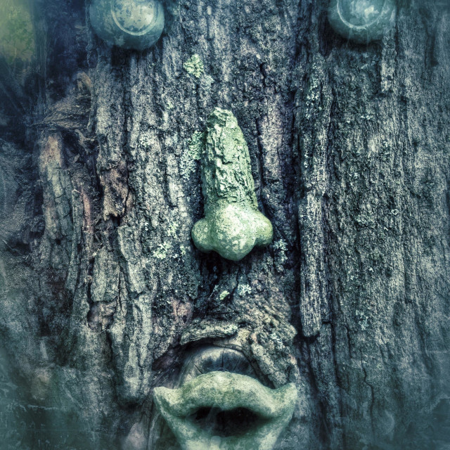 """Scary tree face ornaments on trunk of tree"" stock image"