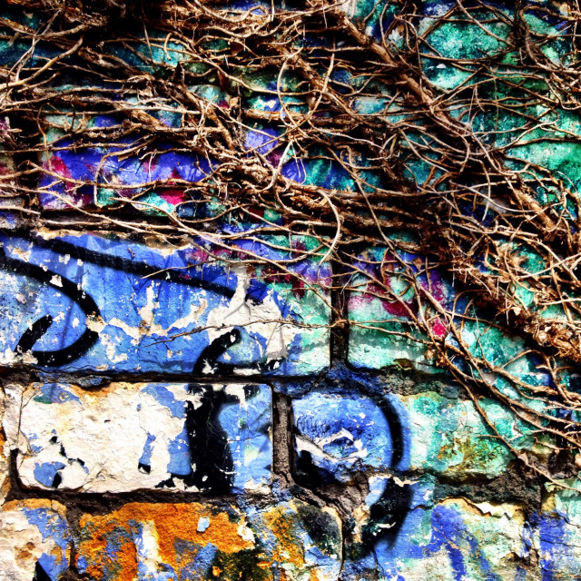 """Ivy vines reclaim a graffiti wall"" stock image"
