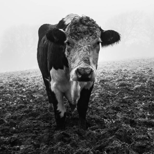 """Friesian Fog"" stock image"