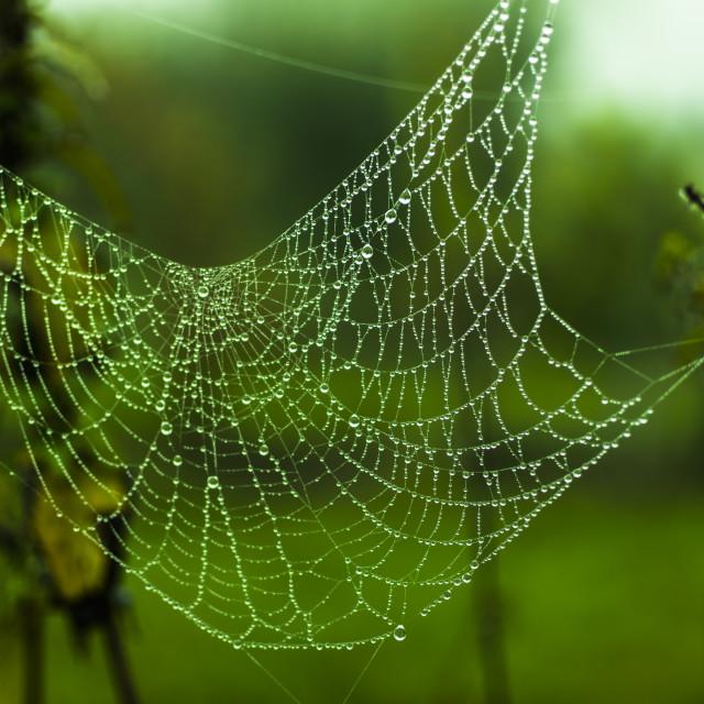 """Web"" stock image"