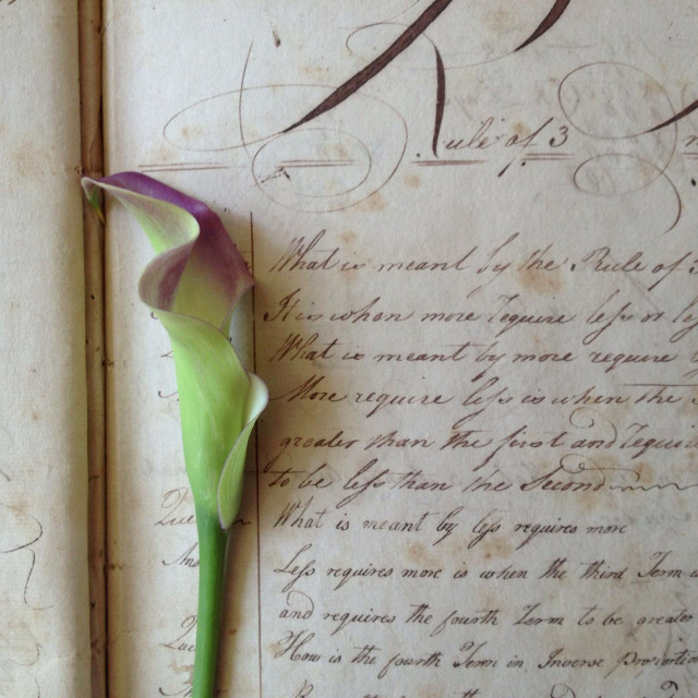 """Calla lily on 19th century student workbook"" stock image"