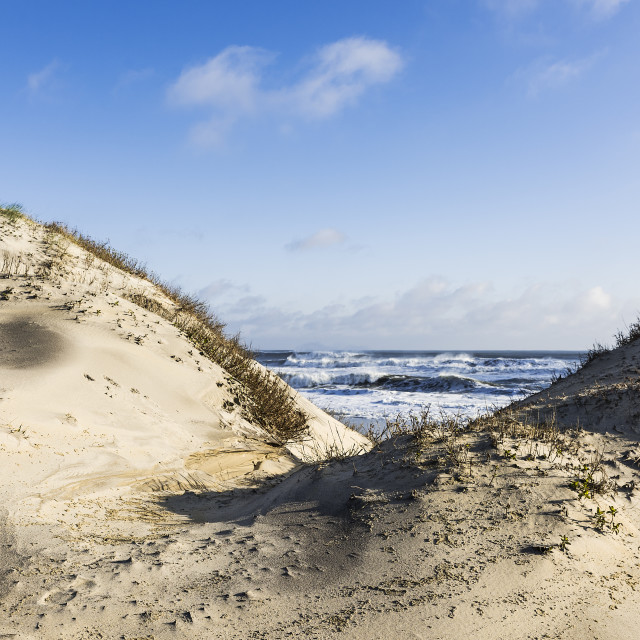 """Dunes and ocean at Cape Hatteras National Seashore, Outer Banks, North Carolina, USA"" stock image"