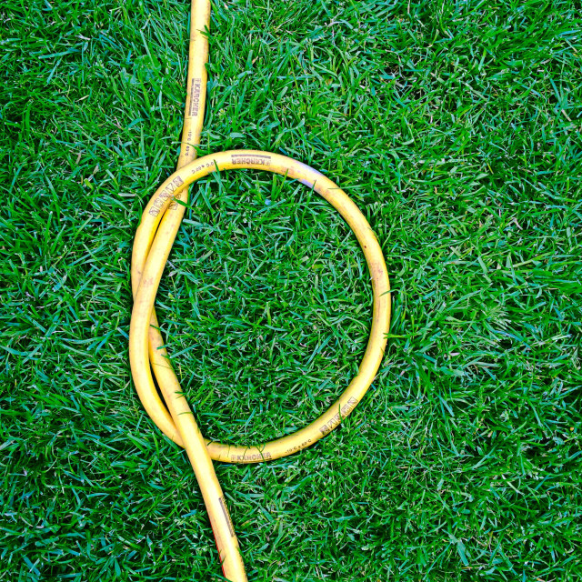 """Green Grass and knotted yellow garden hose"" stock image"