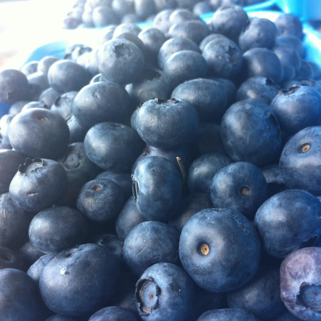 """""""Delicious ripe blueberries with the light hitting them"""" stock image"""