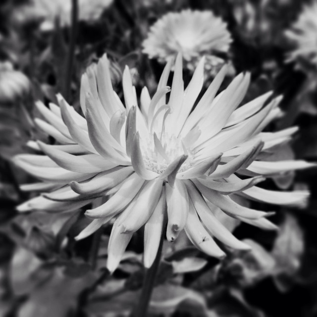 """""""Summer flower structure in monochrome : reaching out for light."""" stock image"""