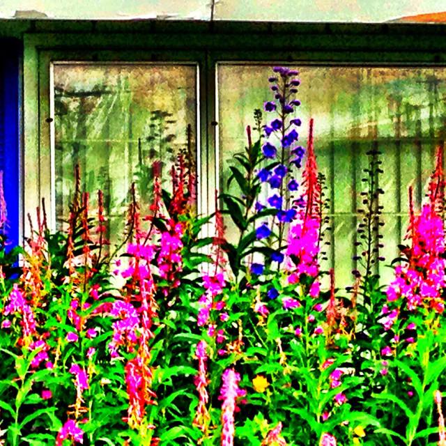 """Brilliant summer flowers"" stock image"