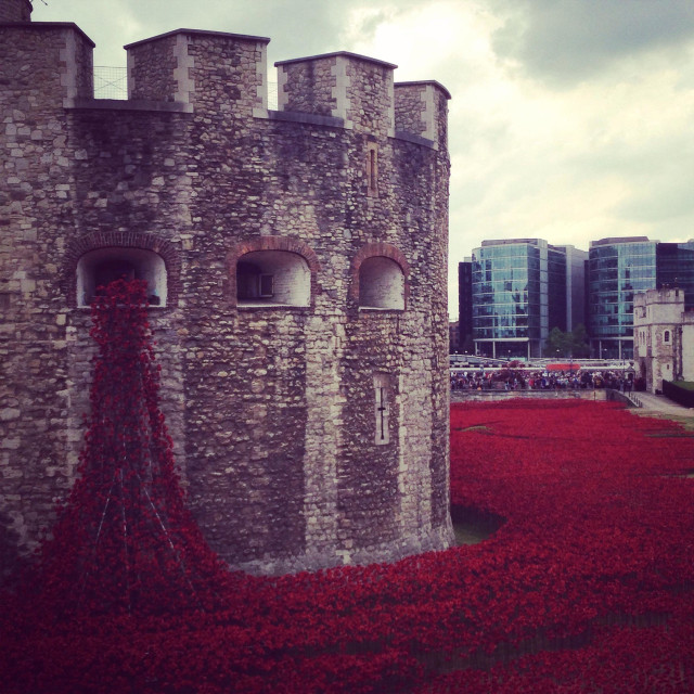 """""""Tower of London with 2014 ceramic poppy artist tribute"""" stock image"""