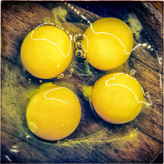 """Four egg yolks"" stock image"