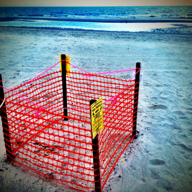"""A protected sea turtle nest, Jacksonville Beach , Florida, USA."" stock image"