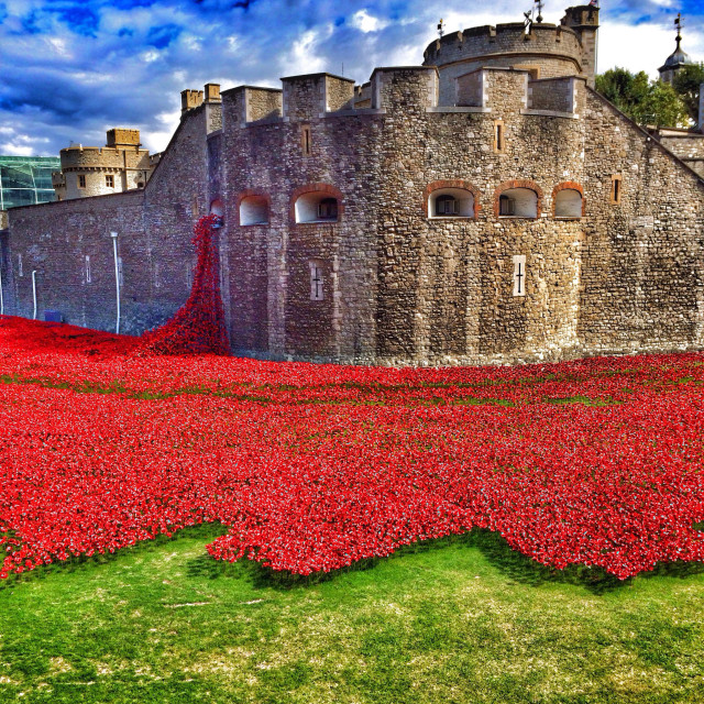 """""""Poppies at London Tower"""" stock image"""